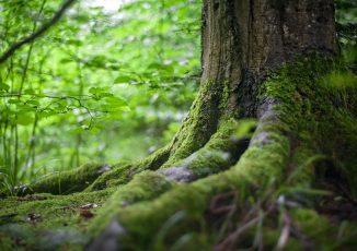 Environmental Sciences|環境学